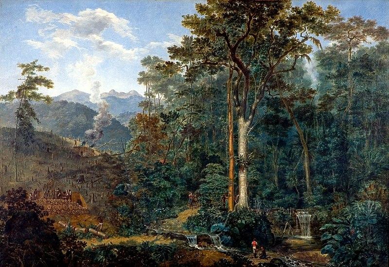 File:Félix Taunay - 1830 ca. - Mata Reduzida a Carvão.jpg