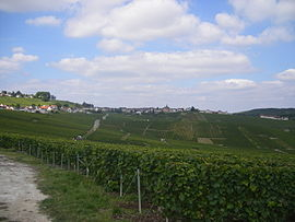 Cramant as seen from the south, with its vineyards in the foreground.