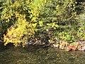 Fall Colors (37972331065).jpg