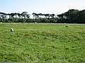 Farmland at Rock South Farm - geograph.org.uk - 575475.jpg
