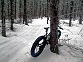 Fatbiking in Brookvale Nordic area, PEI (39444785205).jpg