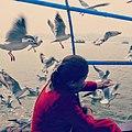 Feeding gulls at Allahabad.jpg