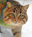 Felis silvestris silvestris small gradual decrease of quality.png