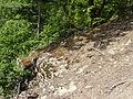 Felsen in der Dehl (Hoch-Weisel) 07.JPG