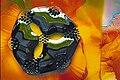 Ferrofluid.Frankel.jpg
