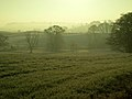 Fields in Early Morning Mist - geograph.org.uk - 638746.jpg