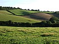 Fields near Buckland - geograph.org.uk - 545228.jpg