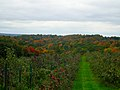 Fleming Orchards Apple Trees - panoramio.jpg