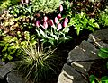 Flickr - brewbooks - Our Front Garden in Late Afternoon Light.jpg