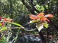 Flor roja en el parque.JPG