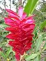 Flora Parque Nacional Manu 04.jpg