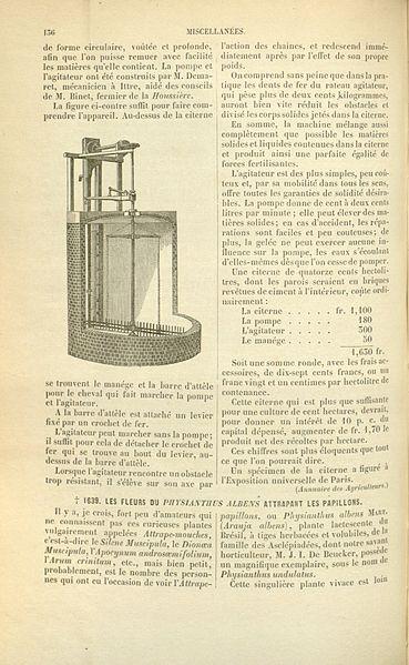 File:Flore des serres v17 136.jpg