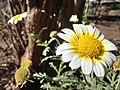 Flower(HDR).jpg