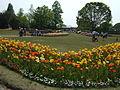 Flower-center142440.jpg