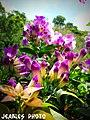 Flower - panoramio (19).jpg