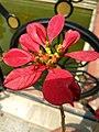 Flower 34 HDR.jpg