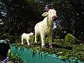 Flower show-6-cubbon park-bangalore-India.jpg
