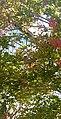 Flowering tree in front of building, detail.jpg
