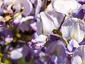 Flowers (9060431342).jpg