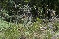 Flowers? (6).jpg