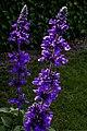 Flowers Jpg (135019877).jpeg