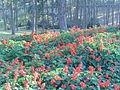 Flowers in Dalat 6.jpg