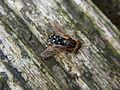 Fly sbt cb002.jpg