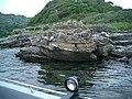 Folded Rocks, Ardenstur Headland - geograph.org.uk - 59021.jpg