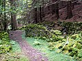Footpath to Ladybower Reservoir - geograph.org.uk - 473275.jpg