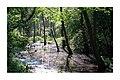 Forêt Rhénane (213038123).jpeg
