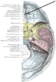Foramen ethmoidale anterius.PNG