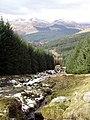 Forest, Lochgoilhead. - geograph.org.uk - 150491.jpg