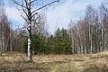 Forest between Olgino and Lisy Nos, 2nd of May 2020.jpg