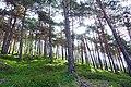 Forest in Auronzo di Cadore.jpg