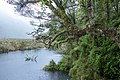Forest in Fiordland National Park, New Zealand 02.jpg