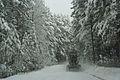 Forest near Ob river in Altai Region 32.JPG