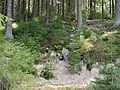 Forest near the Große Bode 18.jpg