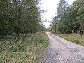 Forest road - geo.hlipp.de - 43495.jpg
