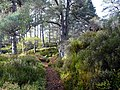 Forest walk, Glen Strathfarrar. - geograph.org.uk - 1534547.jpg