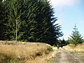 Forestry road, Mid Rig - geograph.org.uk - 565830.jpg