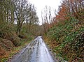 Forestry road on route of former railway in Wyre Forest - geograph.org.uk - 1690982.jpg
