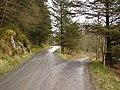 Forestry roads near Nanty Farm - geograph.org.uk - 1107282.jpg