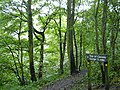 Fork in path after crossing Causey Arch - geograph.org.uk - 246779.jpg