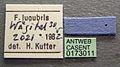 Formica lugubris casent0173011 label 1.jpg