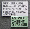 Formica picea casent0173868 label 1.jpg