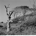 Fotothek df ps 0001185 Windflüchter ^ Landschaften ^ Küstenlandschaften - Bodden.jpg