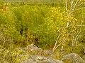 G. Novouralsk, Sverdlovskaya oblast', Russia - panoramio (176).jpg