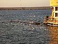 Gallipoli9 - panoramio.jpg