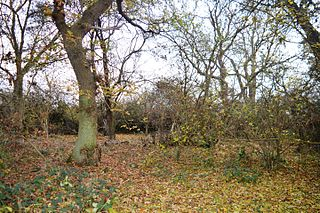Gamsey Wood nature reserve in the United Kingdom