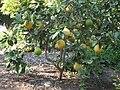 Gardenology.org-IMG 0788 hunt07mar.jpg